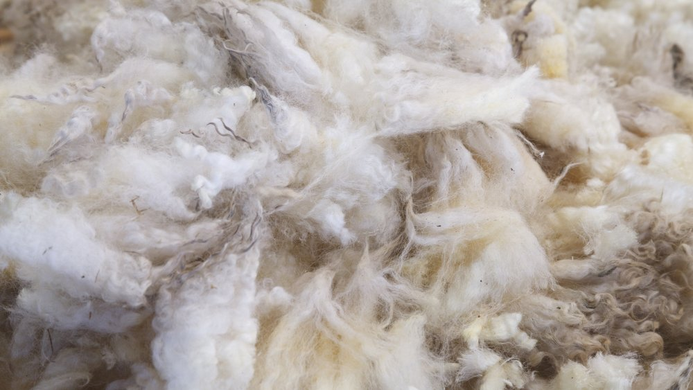 Sheep fur and bubble gum